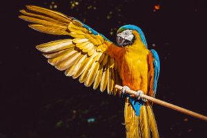 Spotkanie z Panią Papugą